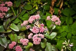 Der erste Schmetterling in seinem neuen Zuhause! Foto: Anders Balari